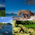 Pak Jokowi Tidak Ingin Pulau Komodo Ditutup